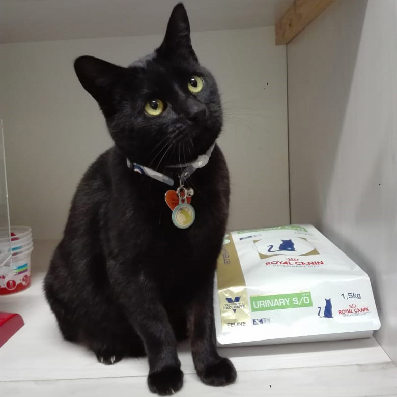 Salem Teva Veterinary Clinic