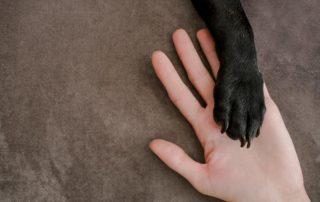 Dog-Nails-Clipped